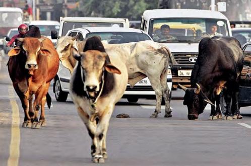 Полицейский, спасая корову, сбил четырех человек