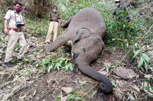 Молния убила 18 слонов