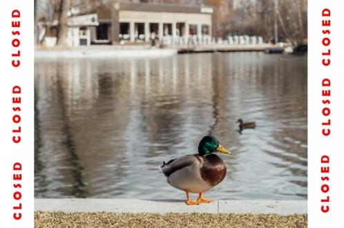 Какие парки закрыла Москва из-за коронавируса