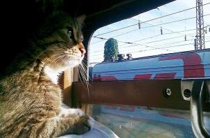 Хомяк поедет поездом