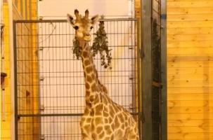 Праздничная акция от жирафа Радуги