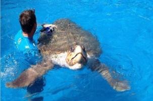 На ЧМ по футболу в Бразилии предсказывает черепаха