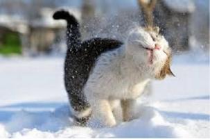 «Юмористы» вызвали врачей к котенку